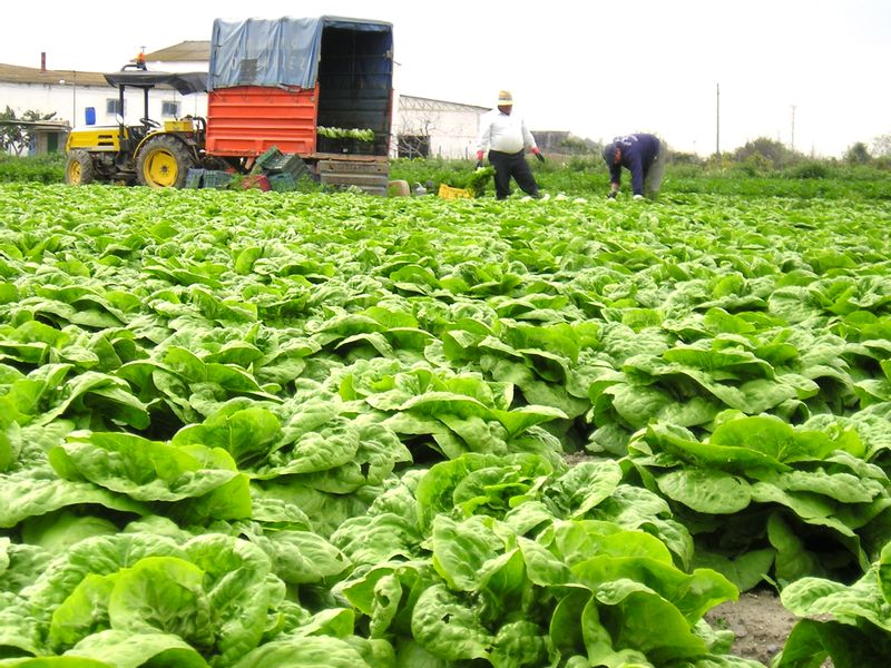 Healthy Food and Sustainable Agriculture